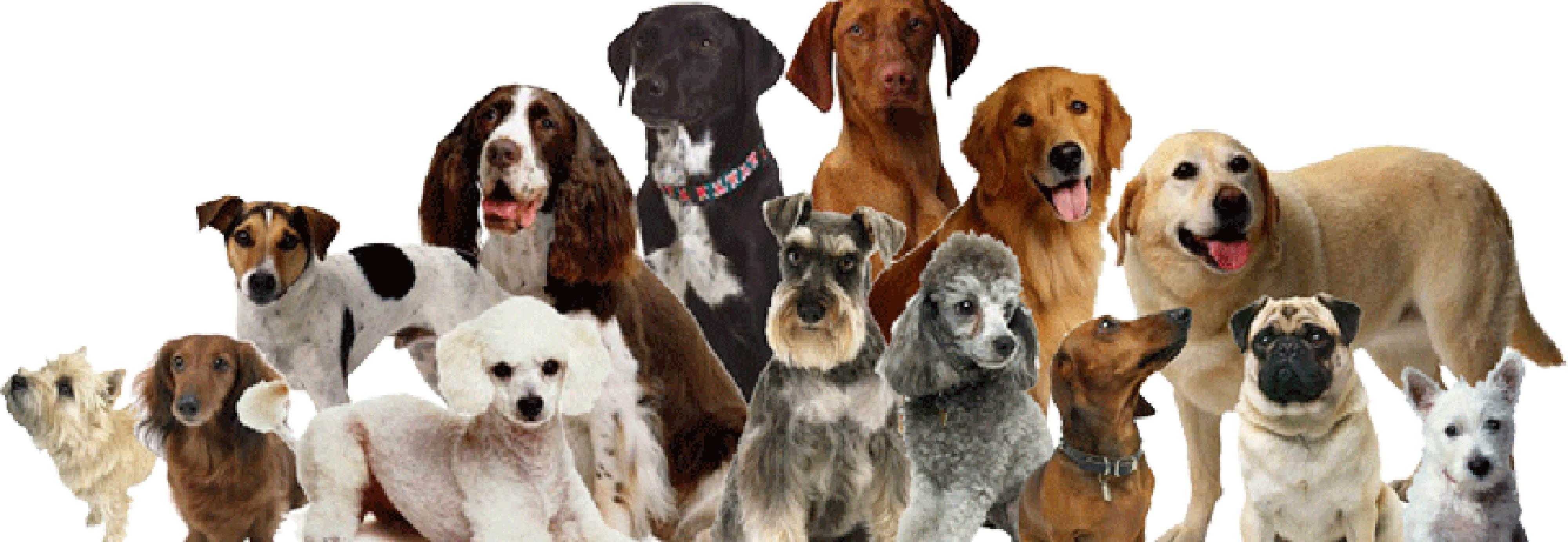 Canine Companions Club