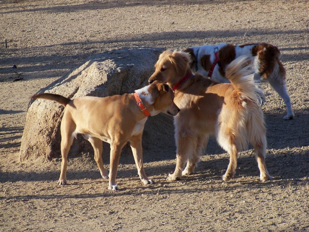 01-17-16 Dog Park Dogs