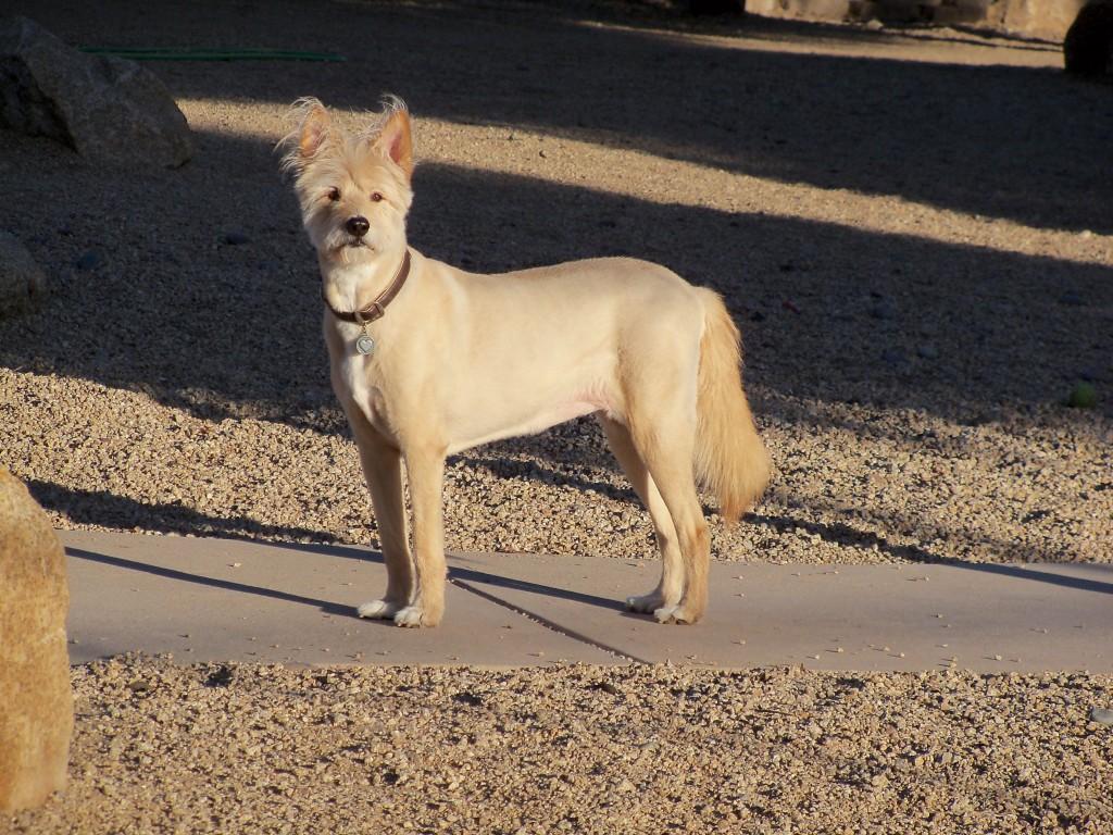 01-17-16 Dog Park Dogs 3